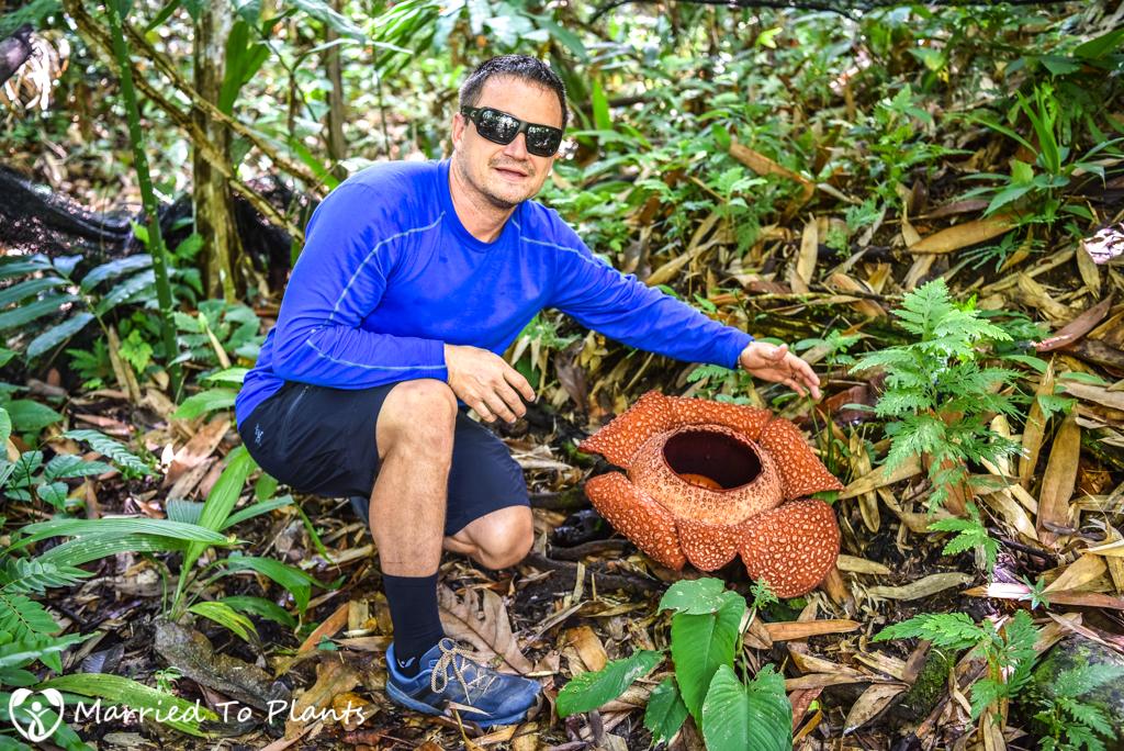 Rafflesia in Borneo