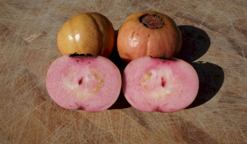 Ripe Red Malaysian Guava