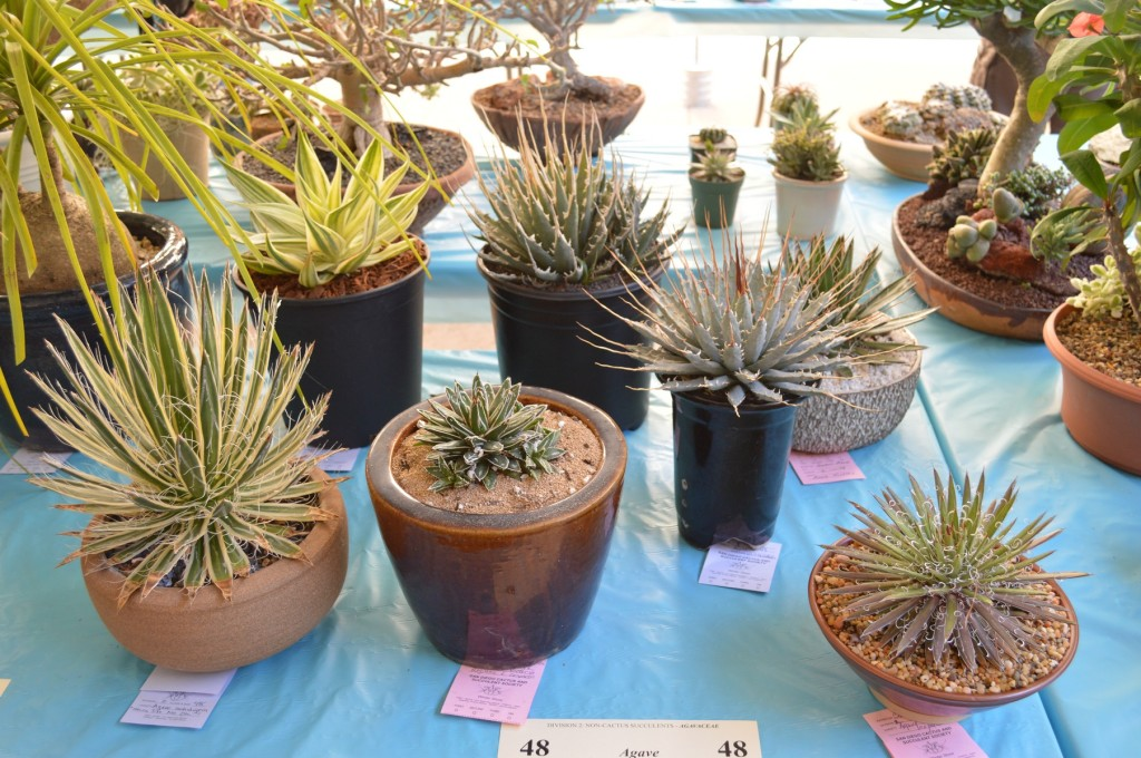 SDCCS Agave Display