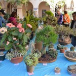 San Diego Cactus and Succulent Society (SDCSS) Winter Show and Sale
