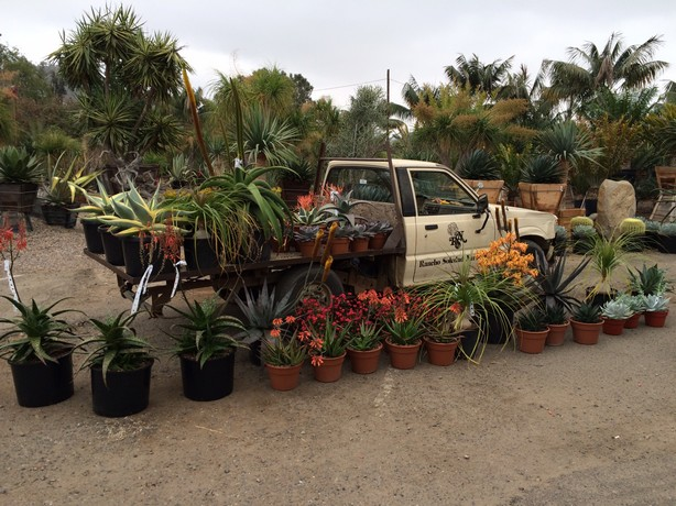 Rancho Soledad Nursery Plants