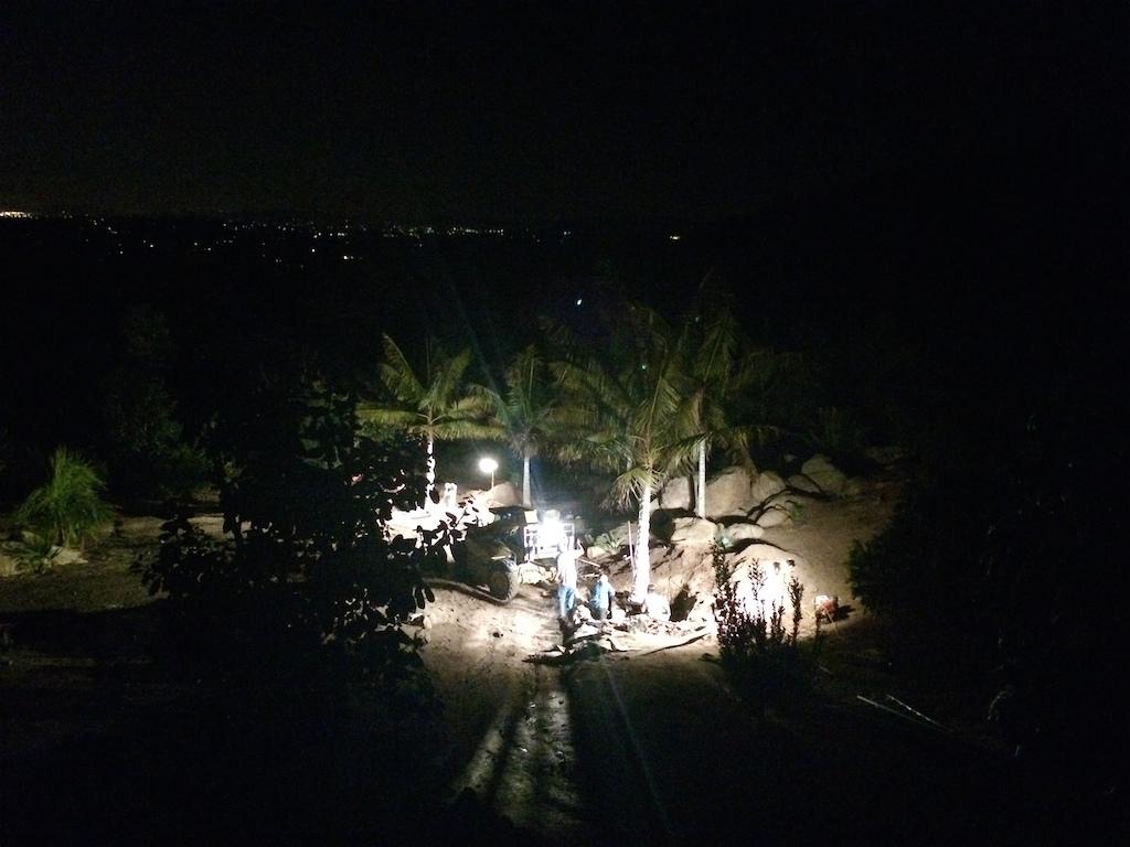 Dypsis leptocheilos Night Digging