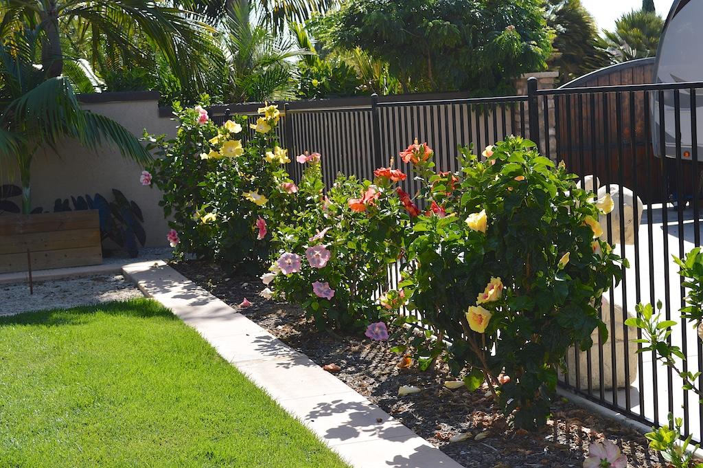 Exotic Hibiscus Row