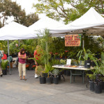 San Diego Botanical Garden Palm, Cycad, Bamboo and Tropical Plant Sale