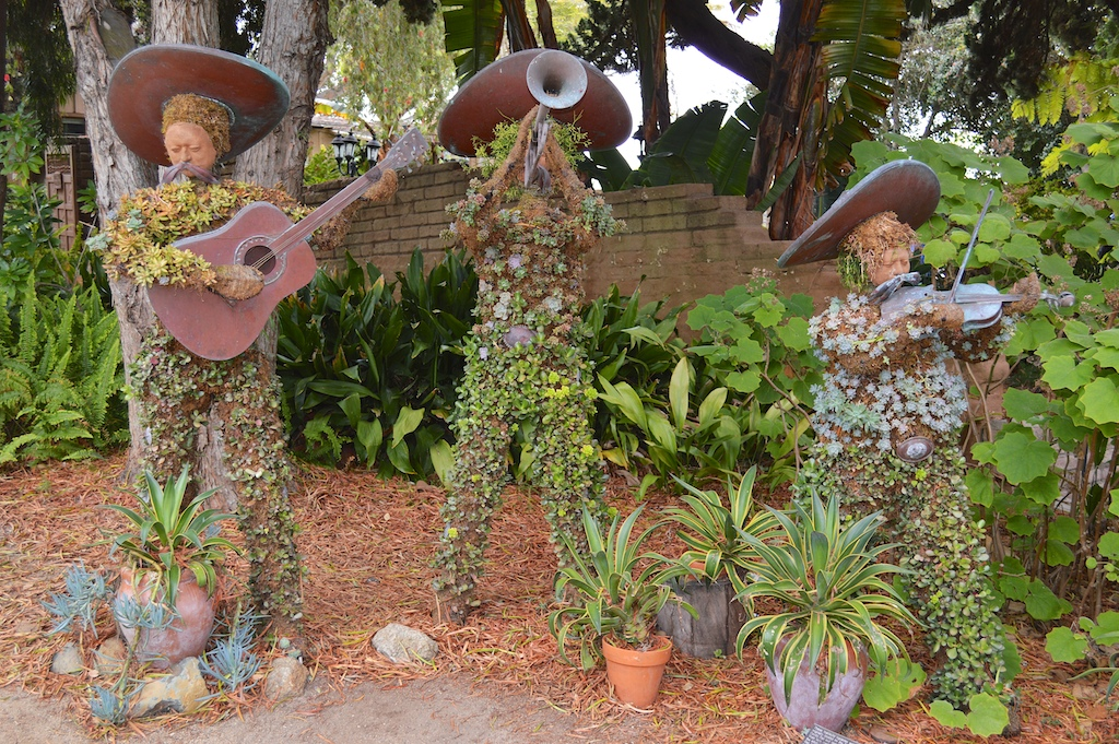 SDBG - Succulent Mariachi Band Display