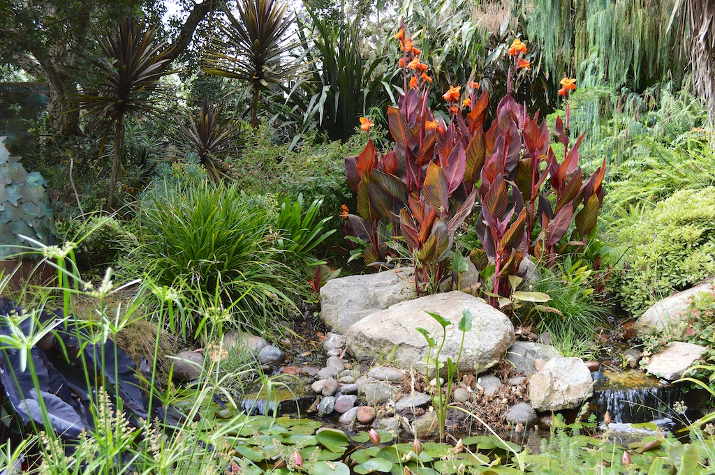 SDBG - Tropical Pond Display