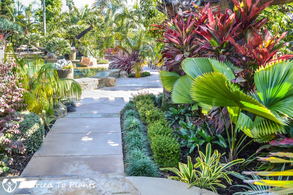 Geiger Garden Backyard Licuala
