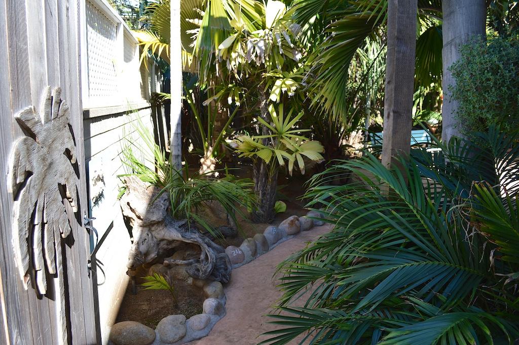 Dennis Willoughby's Backyard Entrance