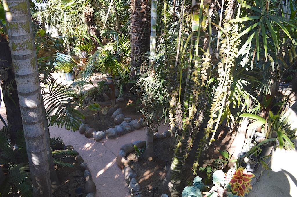 Dennis Willoughby's Backyard Garden View