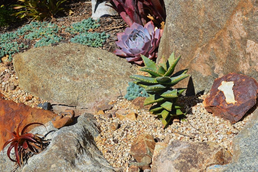 Aloe 'Hellskloof Bells'