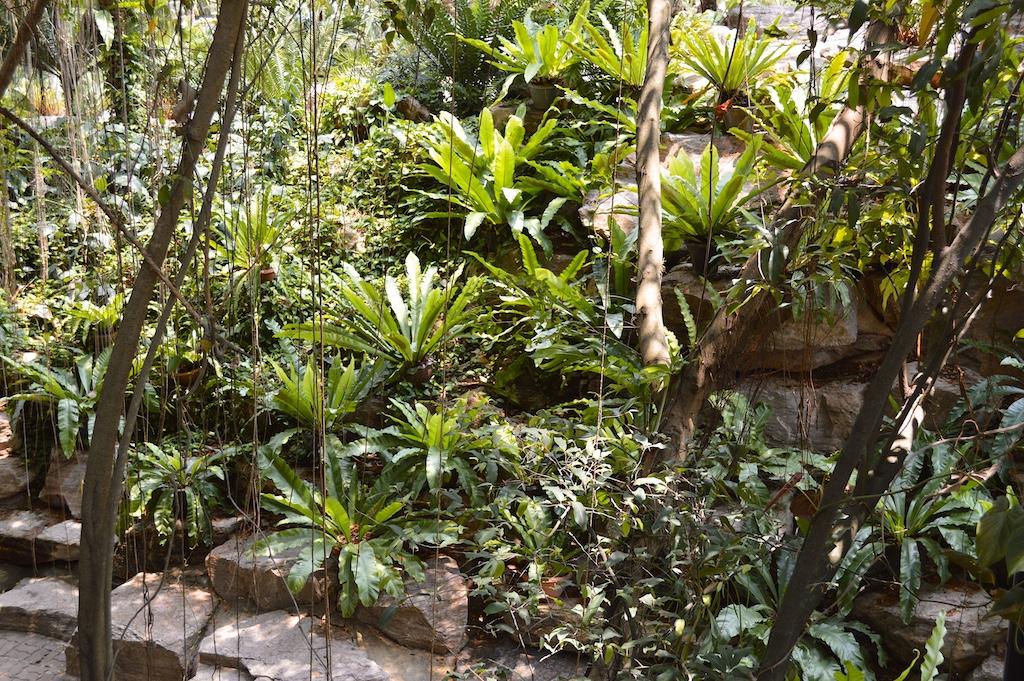 Nong Nooch Tropical Botanical Garden Asplenium nidus