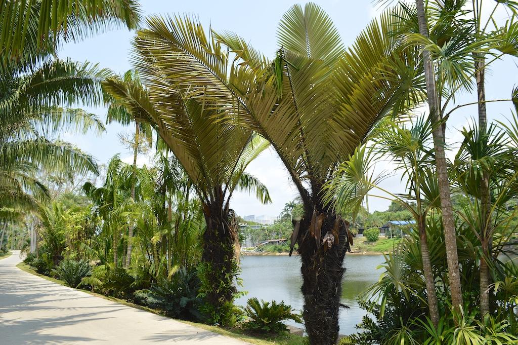 Nong Nooch Tropical Botanical Garden Astrocaryum