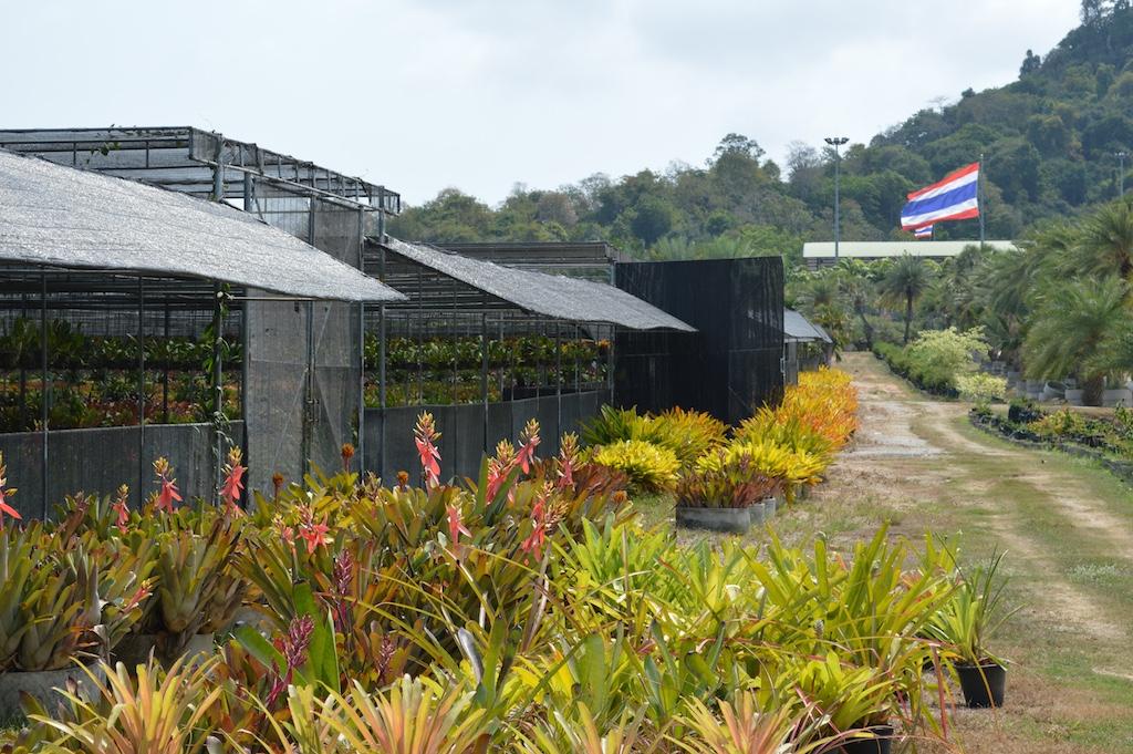 Nong Nooch Tropical Botanical Garden Bromeliad Nursery