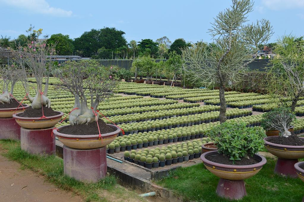 Nong Nooch Tropical Botanical Garden Nursery