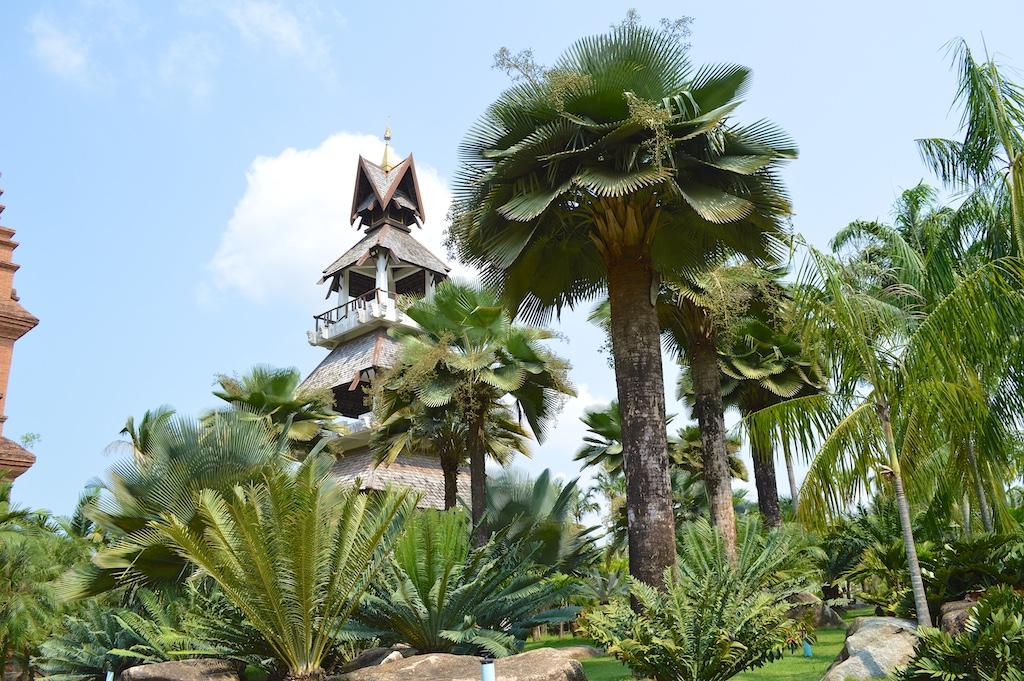 Nong Nooch Tropical Botanical Garden Copernicia baileyana