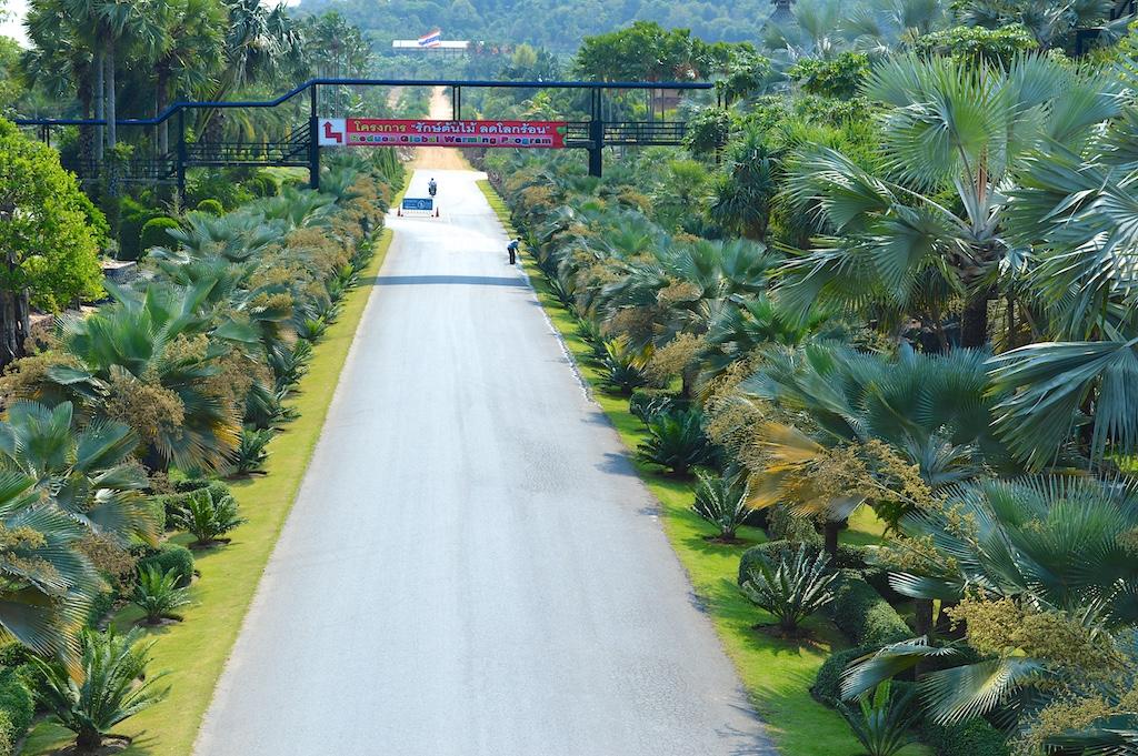 Nong Nooch Tropical Botanical Garden Copernicia hospita Row
