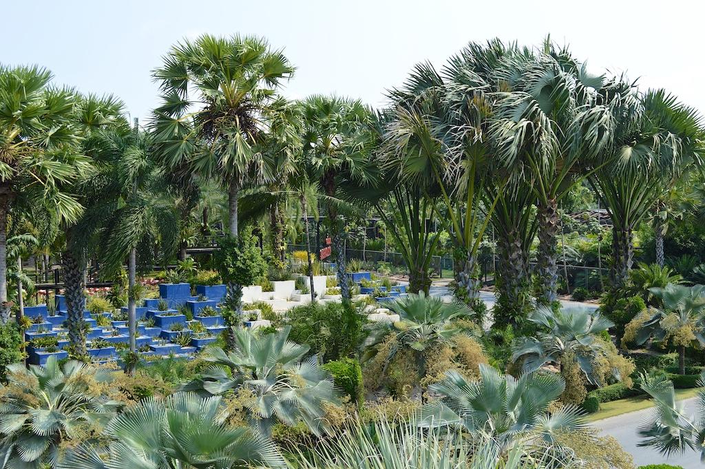Nong Nooch Tropical Botanical Garden Corypha lecomtei