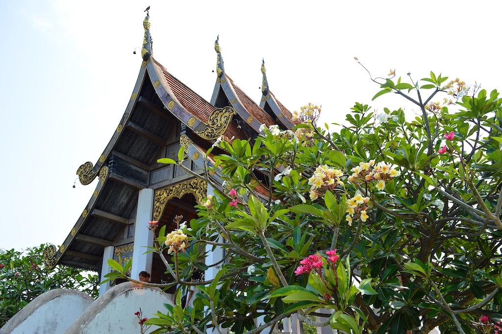Nong Nooch Tropical Botanical Garden Grafted Plumeria