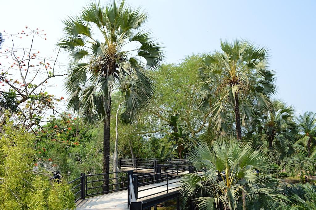 Nong Nooch Tropical Botanical Garden Medemia argun