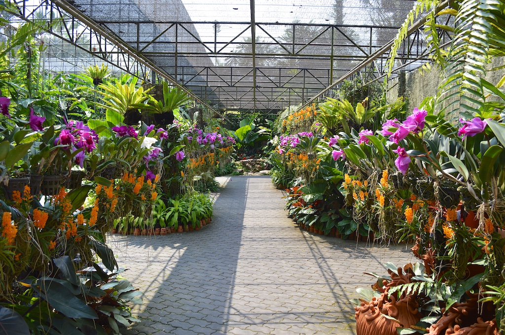 Nong Nooch Tropical Botanical Garden Orchids