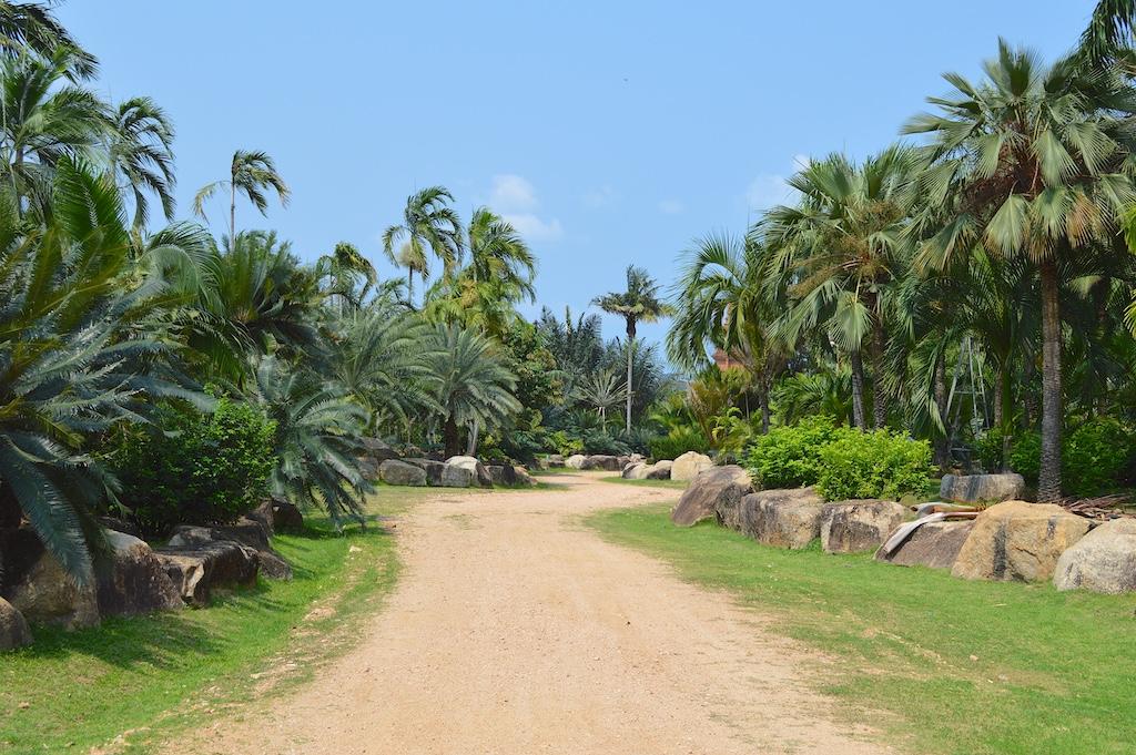 Nong Nooch Tropical Botanical Garden Palm Road
