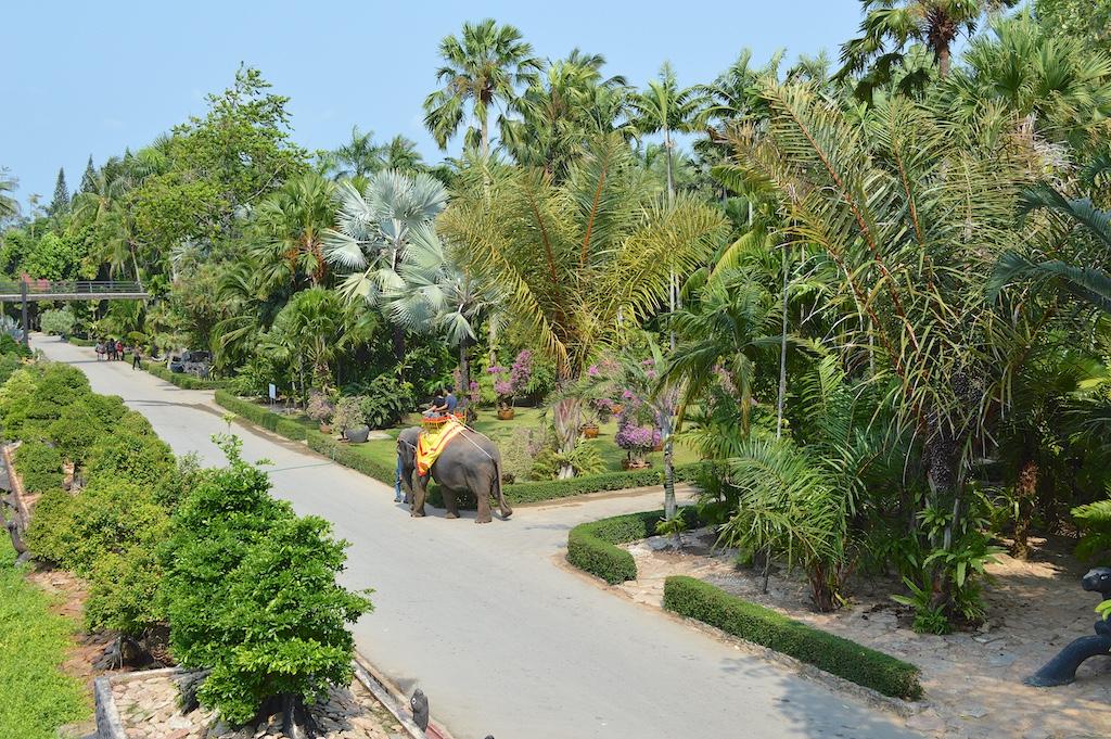 Nong Nooch Tropical Botanical Garden Palms