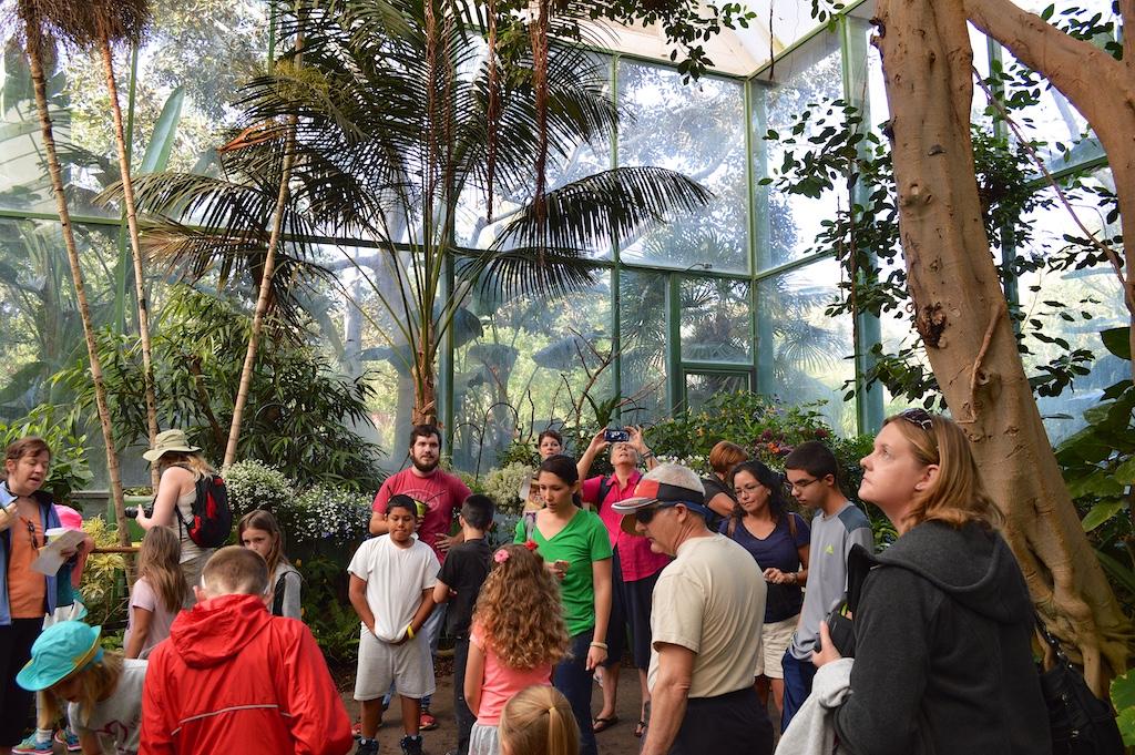 Safari Park Butterfly Jungle Crowd