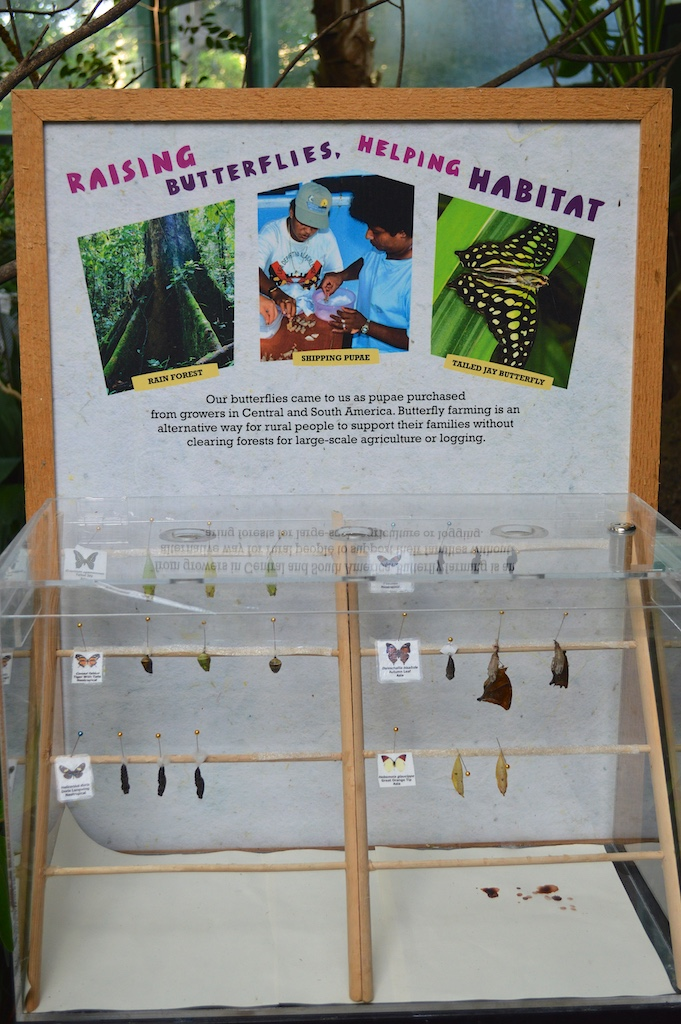 Safari Park Butterfly Jungle Display