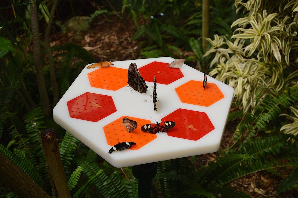Safari Park Butterfly Jungle Landing Pad