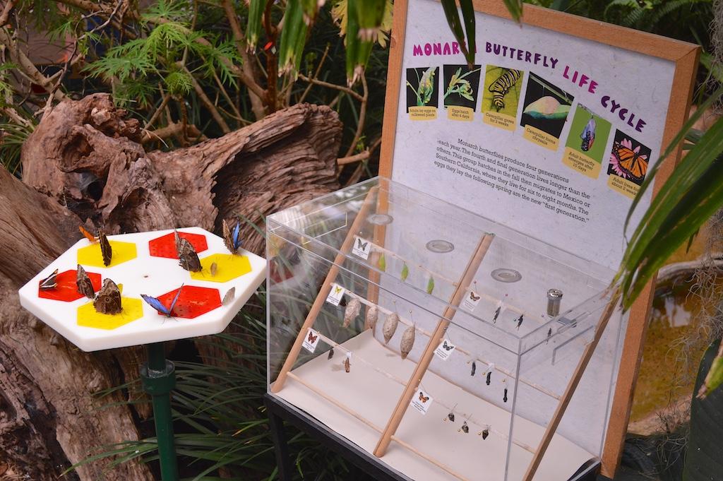 Safari Park Butterfly Jungle Monarch Display