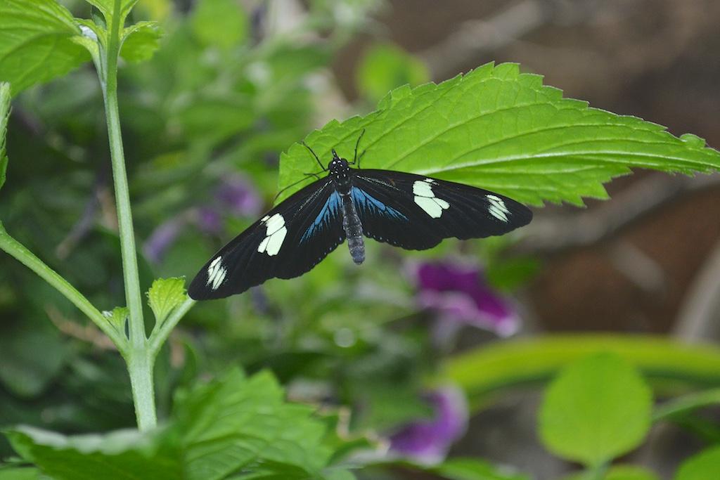 Safari Park Butterfly Jungle Unknown Species