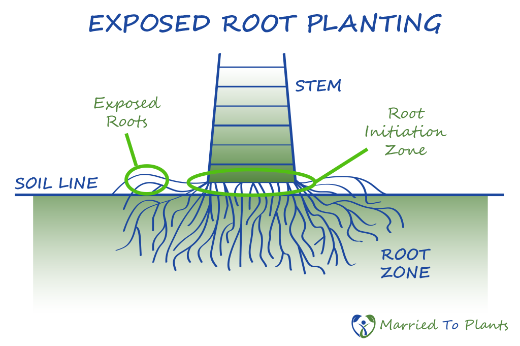 Tree Roots Growth Diagram - Enthusiast Wiring Diagrams •