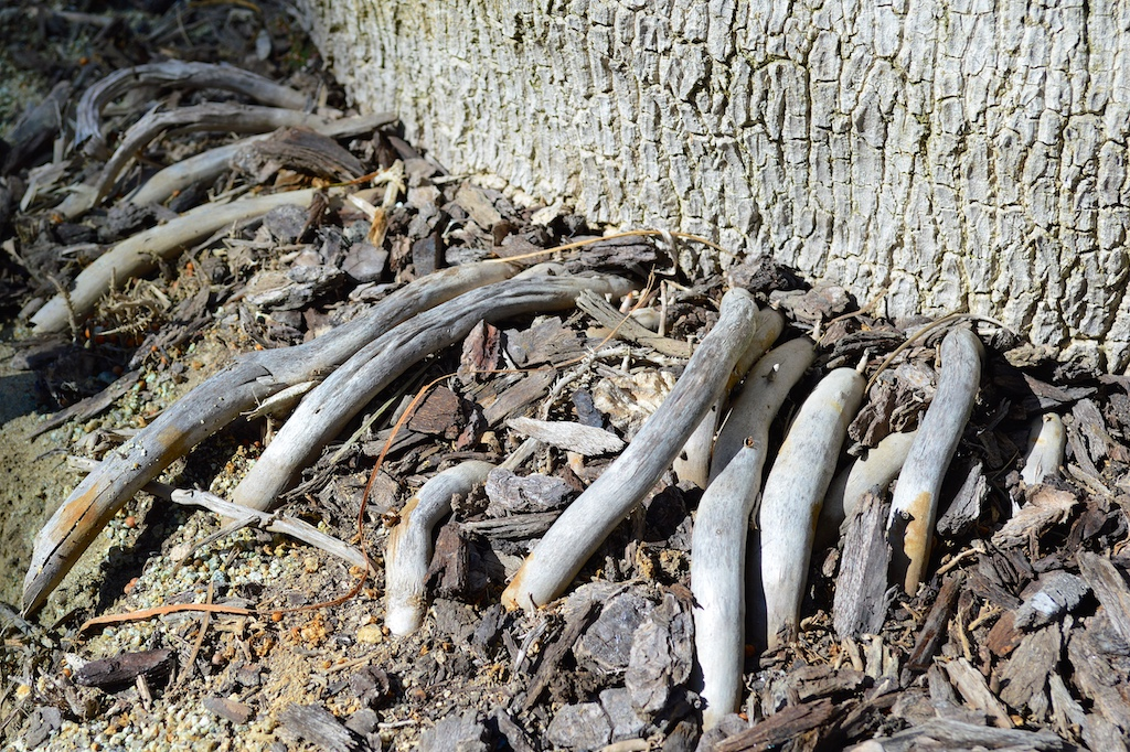 how to stop tree roots from invading the garden