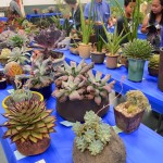 San Diego Cactus and Succulent Society Summer Show and Sale