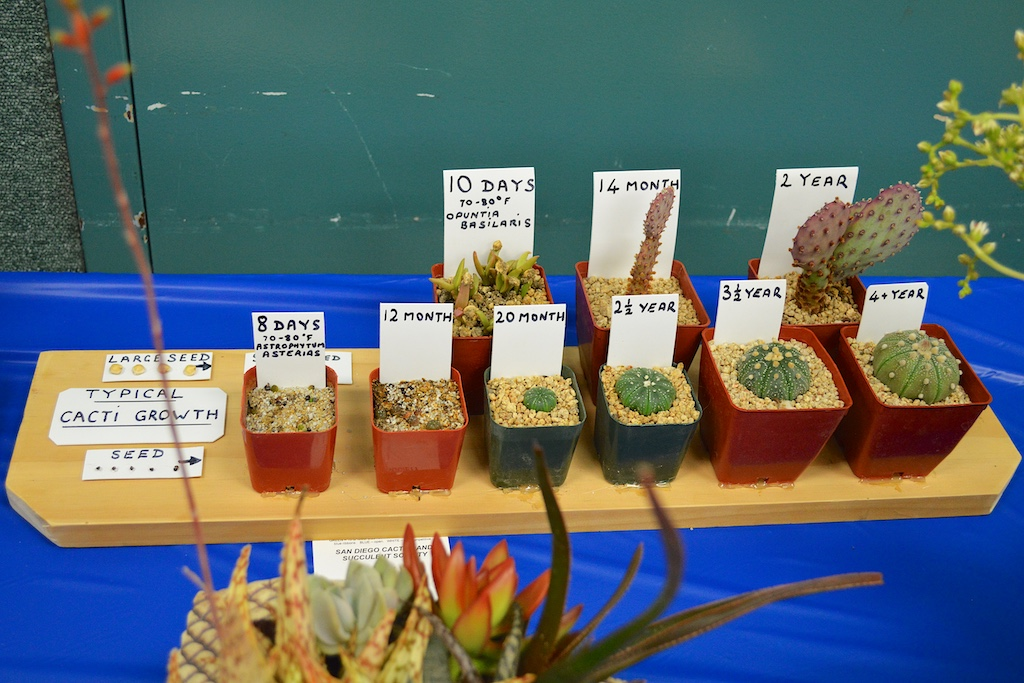 SDCSS Growth Display