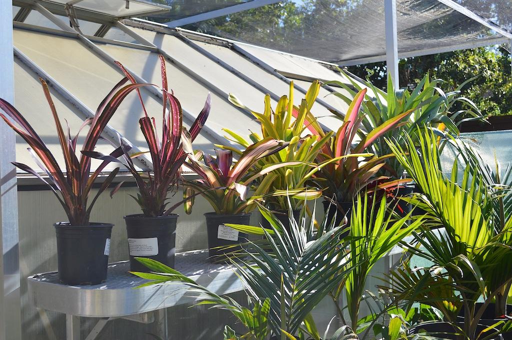 Bromeliads Awaiting Planting