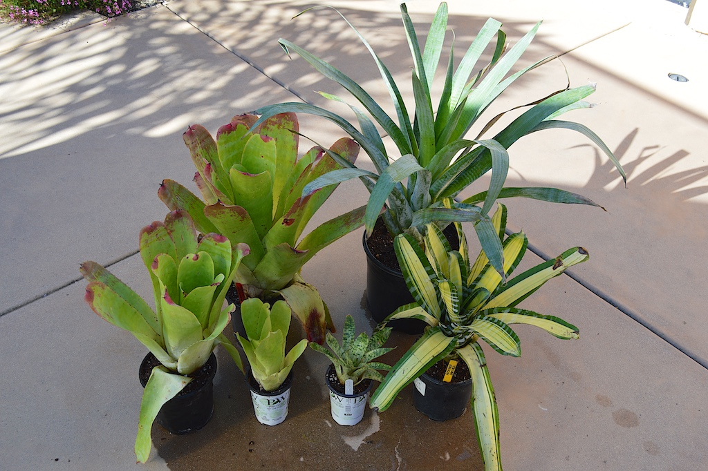 Bromeliads bought off eBay
