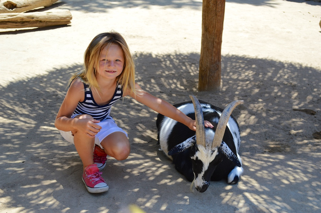 Goat petting area at The Living Desert