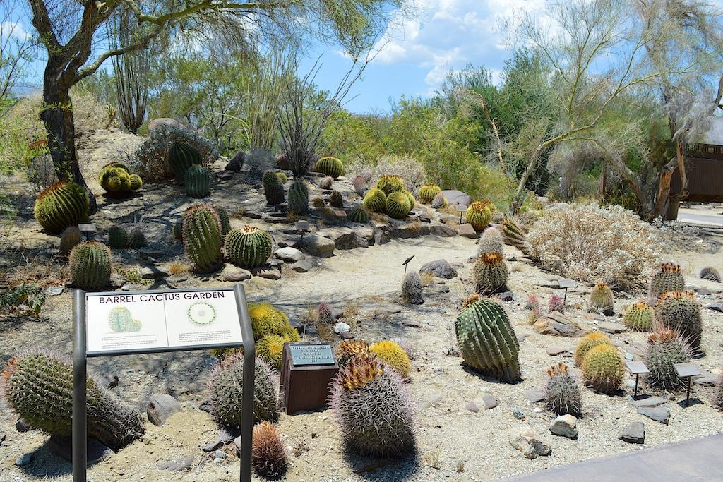 Living Desert Barrel Cactus Garden