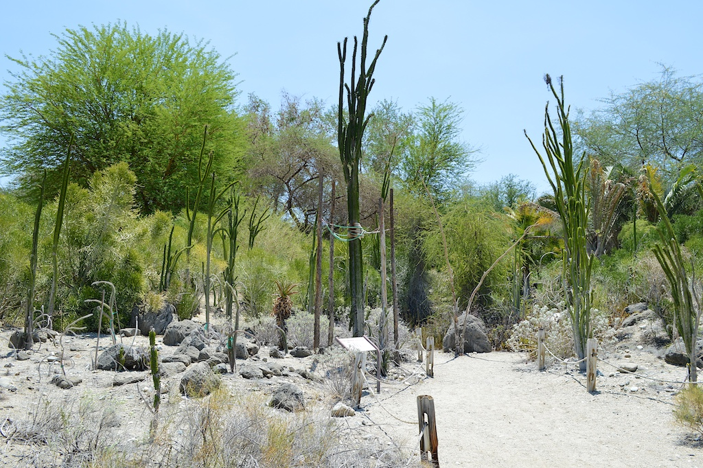 The Living Desert Madagascar Garden
