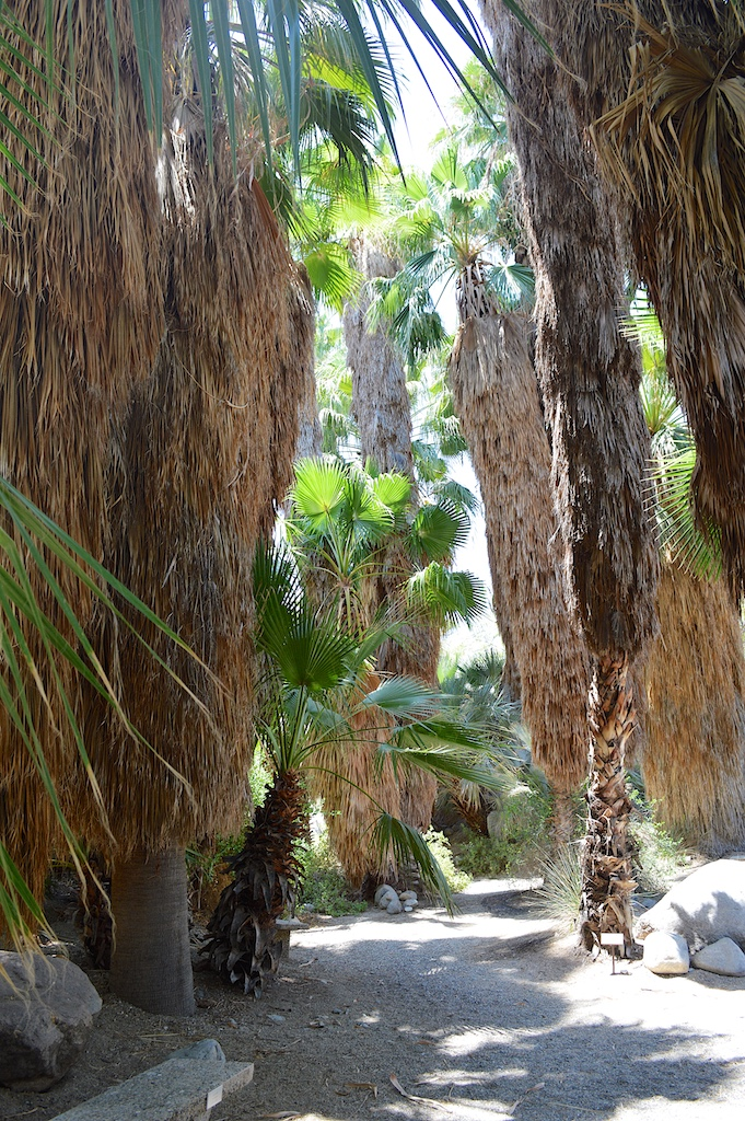 Palm Canyon at The Living Desert
