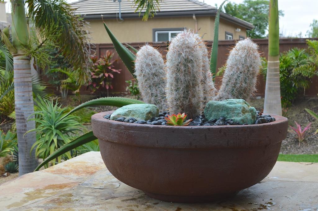 Succulent Pot Creation Final Results