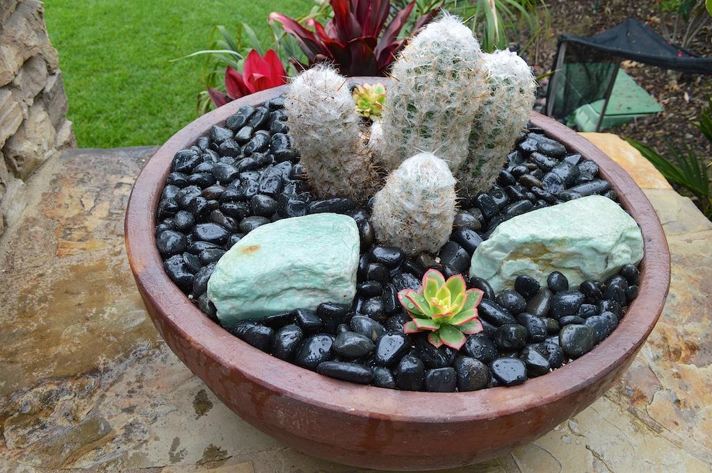 Succulent Pot Creation Step 10