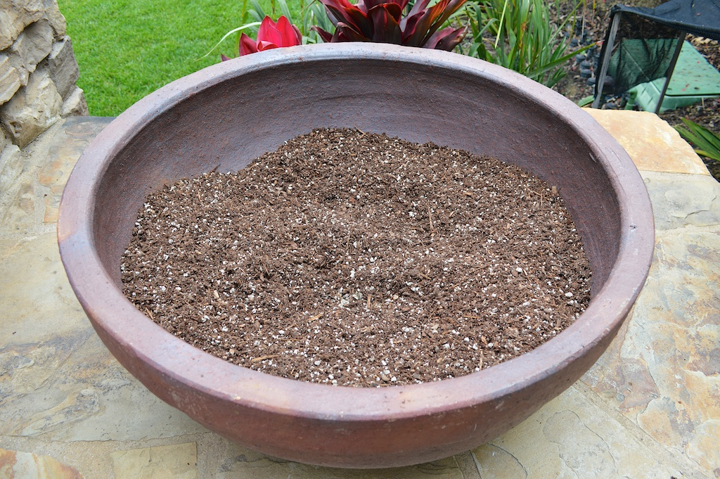 Succulent Pot Creation Step 2