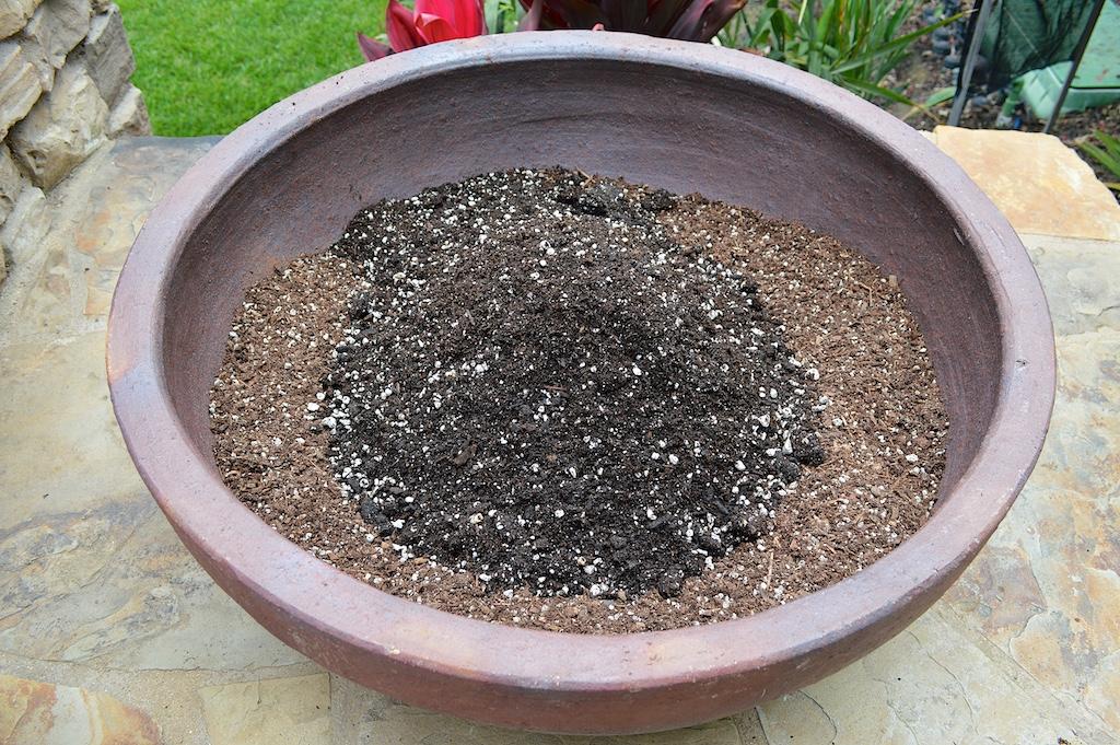 Succulent Pot Creation Step 3