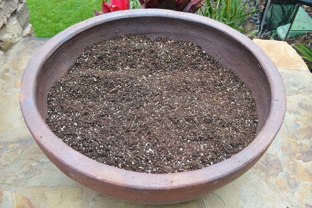 Succulent Pot Creation Step 4
