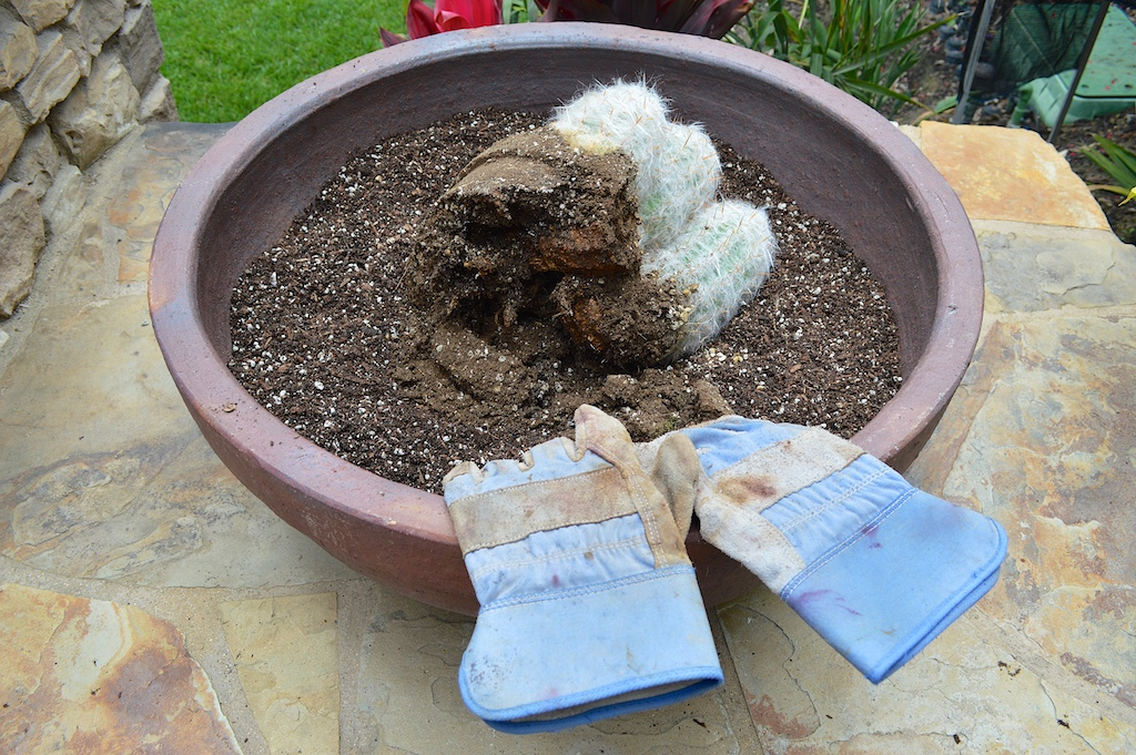 Succulent Pot Creation Step 5