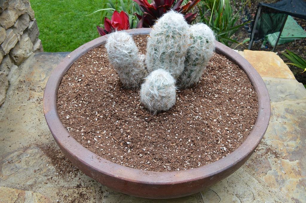 Succulent Pot Creation Step 5a