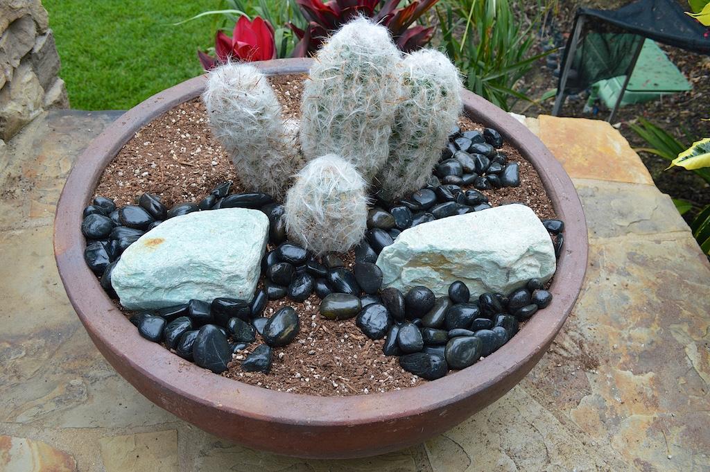 Succulent Pot Creation Step 7