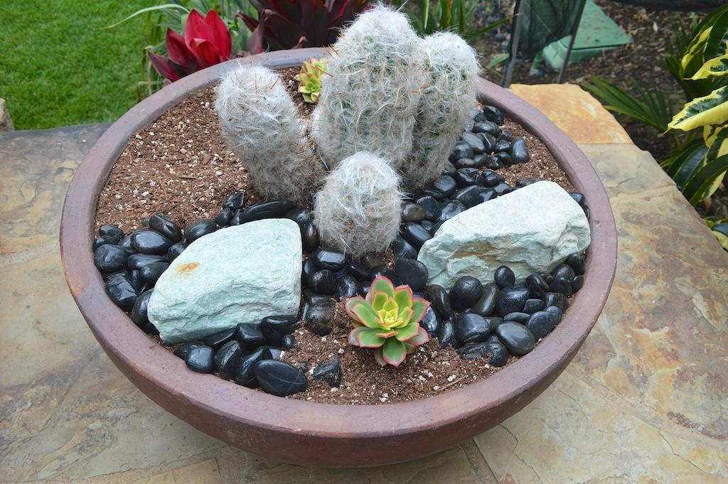 Succulent Pot Creation Step 8